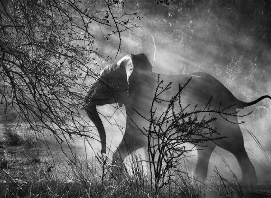 Kafue National Park, Zambia, 2010 Sebastiao Salgado:Amazonas Images:Contrasto